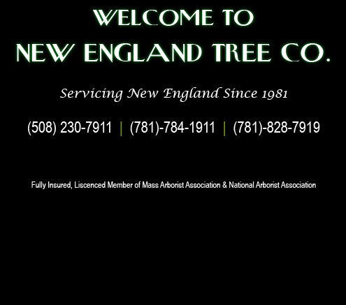 New England Tree Co.